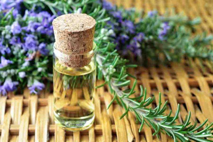 Beneficios para la salud del aceite esencial de orégano