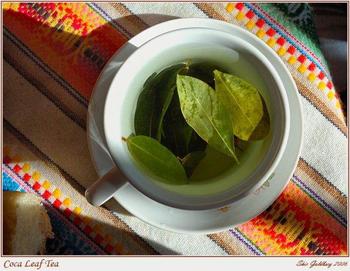 Beneficios para la salud del té de coca