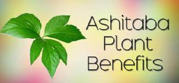 Beneficios de ashitaba en tagalo