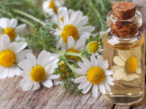 aceite esencial de manzanilla para el cabello