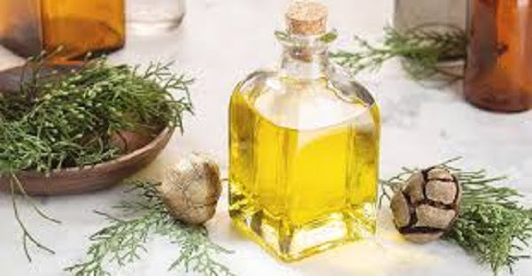 8 sorprendentes beneficios para la salud del aceite esencial de ciprés