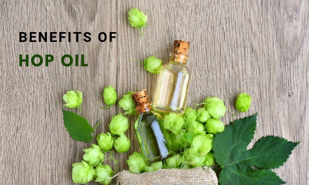 Beneficios del aceite de lúpulo
