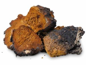 Beneficios para la salud del hongo Chaga
