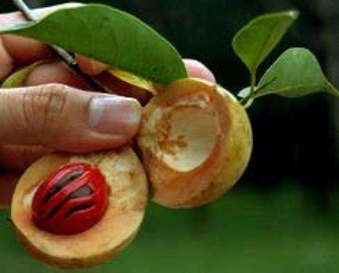 Beneficios para la salud del aceite de nuez moscada