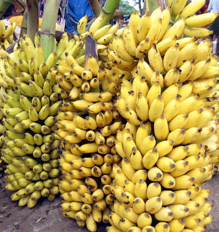 Beneficios para la salud del plátano »Wiki Ùtil  Remedio casero y curas naturales